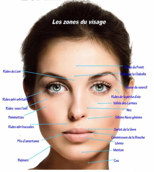 Zones du visage2